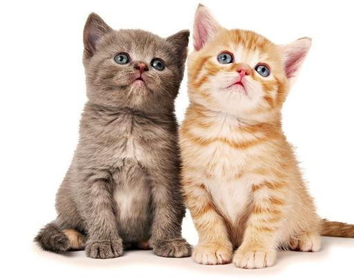 Meer informatie over katten