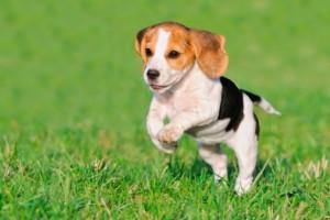 Pup info