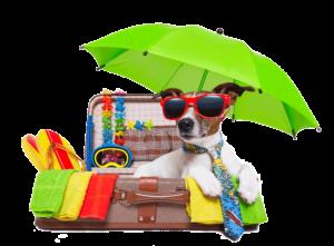 vakantie-hond