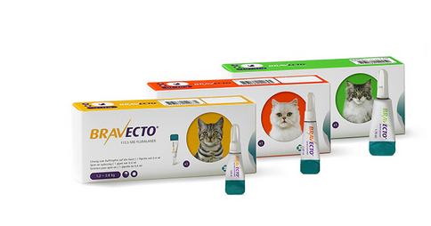 Bravecto kat - 3 maanden bescherming tegen vlooien en teken
